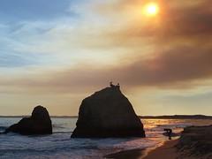 Surf al atardecer. (franmunozr) Tags: gaviotas crepusculo atardecer tabla olas mar rocas puestadesol playa beach sunset surfing surfer surf