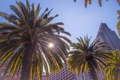 Sunny San Francisco (oliver.nispel) Tags: outdoor sanfrancisco architectural architecture city cityscape frisco nature place sf sky skyline tree unitedstates urban urbex usa california us