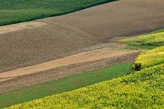 Colori estivi (luporosso) Tags: natura nature naturaleza naturalmente nikond300s nikon colors colori country countryside colline hill marche fermo scorcio scorci italia italy geometrie geometry girasoli sunflowers