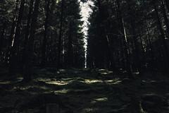 Germany (annajahn) Tags: woods trees germany sauerland