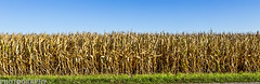 Harvest Time (Ricky L. Jones Photography) Tags: canon teamcanon canonfanpic landscape landscapephotography corn maze harvest fall farming farmer wisconsin midwest
