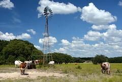Texas Longhorns and Windmill HWW (The Old Texan) Tags: windmill longhorns texas blueskies trees d7100 nikon water explored