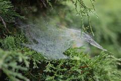 SpidersWeb (KJ.grabowski) Tags: spider web dew atumn nature