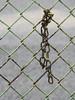 Rusting Fence And Chain; Long Island, New York (hogophotoNY) Tags: hogophoto howardgorchov howardgorchovphotography greatneck newyork unitedstates us rust rusting ny nystate nikon nikonp900 p900camera iso iso100 100 longislandnewyork longislandny