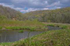 River (wackybadger) Tags: mvc badaxeriver wisconsinstatenaturalarea nikon eagleeyesna river forest wisconsin vernoncounty nikond7000 water nikon1855mmf3556gafsvr tree sna675 mississippivallyconservancy