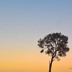 4E86AE04-3DCD-4782-B8A6-371F4B69C416 (h.m.anwar) Tags: rawalpindi pakistan sunset trees