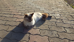 Cat  #cat #cats #meow #gatto #katze #katzen #chat #flin #koka #kot #gatti #gatos #kucing #pisic # #maka # # # # # # # # # # # # # # (egorvel) Tags:  koka  gatto cats maka katzen  katze meow       pisic flin gatti kucing kot gatos  chat      cat