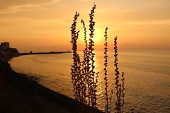 Akakoca'da gn batyor... (syhnbykync) Tags: akakoca dzce karadeniz akam deniz sea bulut evening sunset afternoon cloud shadow sun yaz summer sunny