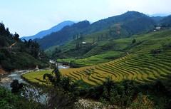 sapa fields5 (Claudio Triani) Tags: landscape rural river vietnam rice