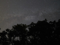 The Milky Way lifted by the trees (Budoka Photography) Tags: milkyway tree tranquility theskyabove stars silhouette silence serene outdoor samyang14mmf28 sonyalphailce7rm2 sky starheaven starry stairs star nightphoto night nightheaven nightsky nightshot le longexposure wideangle tripod