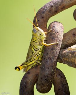 Differential Grasshopper -Explored- DSC_7632