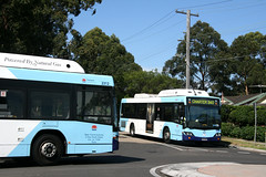 State Transit Authority (Sydney Buses) Mercedes O500LE 2312 and Mercedes O500LE 2313 in Buffalo Road and Cressy Road respectively at Ryde, Sydney, New South Wales, Australia.