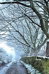 I think it's snowing ! (littlestschnauzer) Tags: uk trees winter england white snow cold west fall public weather stone wall nikon village snowy path branches yorkshire january freezing falling fields to snowing footpath pathway bridleway 2013 d5000 snaowfall elementsorganizer11