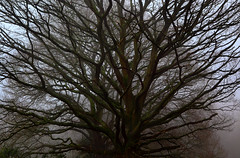 Hampstead Heath, London (Stephen Laverack) Tags: trees winter mist cold tree london hampsteadheath