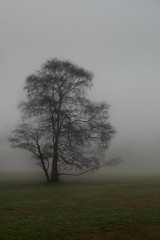 Solitude (Stephen Laverack) Tags: winter tree london fog hampsteadheath
