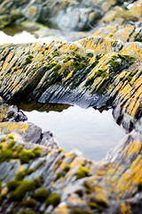 Toward (Daisy Swain) Tags: sea orange water stone moss rocks shore land lichen rockpool dunoon rockpools toward canon50mmf14 canon60d