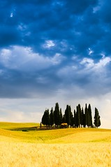 Cypress Trees in Val d'Orcia (5ERG10) Tags: blue trees portrait sky italy green classic sergio grass lines june yellow vertical alberi clouds nikon san holidays europe italia grove postcard hills val tuscany cypress toscana cypresses rolling colline boschetto dorcia d300 tusca cipressi quirico amiti ondulate 5erg10