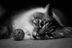 76/365 (Kristacher) Tags: portrait pet cats love cat project day 365 365project