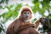 Singapore Zoo-236 (Jon Durman) Tags: animals zoo nikon wildlife april 2012 singaporezoo nikond700 nikon28300mm
