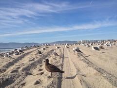 Birds (mockstar) Tags: animals losangeles davidpoe desanimaux