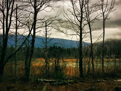 Swamp Chill (maryjaneart) Tags: trees mountain landscape vermont swamp series iphoneart imageblender iphoneography iphone4s iph100