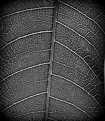 Neuron (Random Photoz) Tags: photography nikon photographers flickraward5 andrewsblog chennaiphotographers yahoo:yourpictures=shadows
