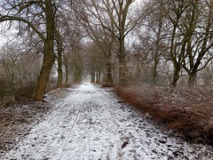 zurck zu mir (shaza sha) Tags: winter snow nature outside killingtime ablenkung hometownlove
