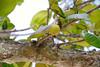 DSC_2588b La Digue, Seychelles: Plant Life (wanderlust  traveler) Tags: ocean africa blue sea panorama nature landscape island rocks paradise palmtree tropical seychelles ladigue torquoise