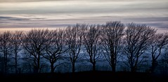 winter blues (explored) (yadrad) Tags: trees winter sunset silhouette dartmoor canon5dmk2 darmoornationalpark
