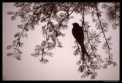Beauty of The Nature (asifsherazi) Tags: morning pakistan sky color bird nature beautiful beauty silhouette fog image pics vibrant picture tele lovely lahore sigma120300 sigma2xtc nikond3 asifsherazi gettyimagespakistanq12013 asifsherazi2013