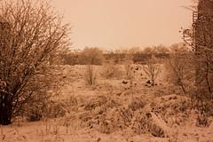 Rail Snow