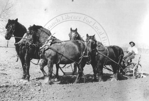 Photo - Historic photo of a riding cultivator