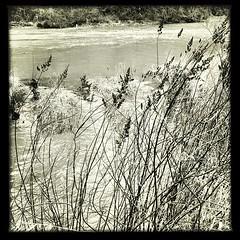 "#stream #river #streamside #current #flow #grasses #landscape #pnw #oregon • <a style=""font-size:0.8em;"" href=""https://www.flickr.com/photos/61640076@N04/8516435452/"" target=""_blank"">View on Flickr</a>"