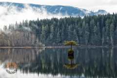 All Alone (Derek_Flynn) Tags: mist lake west reflection tree rain vancouver forest relax island coast dream growth reflect survive thrive
