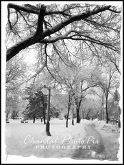 Winter Landscape in Canada (Chantal PhotoPix) Tags: trees winter snow cold ice nature rural forest landscape outdoors woods country snowstorm canadian evergreen wilderness snowfall wintersnow blizzard winterwonderland winterstorm winterlandscape winterscenes