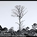 "Vulture in Tree-0009<br /><span style=""font-size:0.8em;"">B&W photo</span> • <a style=""font-size:0.8em;"" href=""http://www.flickr.com/photos/18570447@N02/8547218658/"" target=""_blank"">View on Flickr</a>"