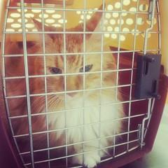 Bailey looooves the vet.