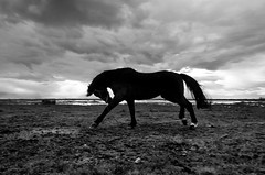 IMGP1472-stavrosstam (stavrosstam) Tags: bw horse clouds running thelittledoglaughed ldlnoir