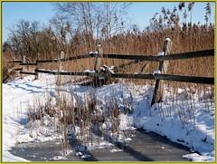 ... on the rocks_wb43_5215 (Aureusbay) Tags: winter snow ice reed pen fence germany pond nini paddock lneburg niedersachsen lowersaxony mft olypen epl1 mzuiko1442mmf3556