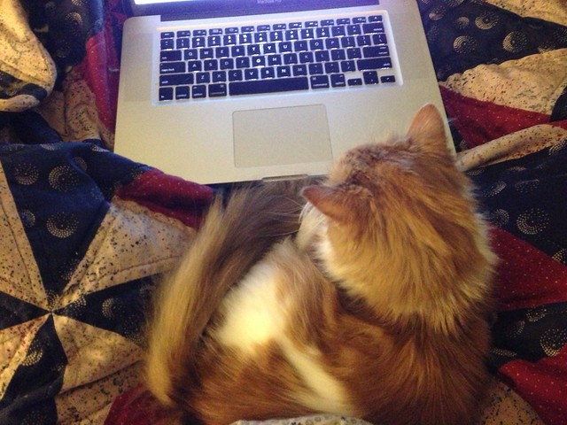 My early-morning editorial assistant, hard at work.