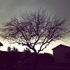 Tree at sunset. (David Alan Lux) Tags: trees light sunset sky sun sunlight tree nature sunshine clouds sunrise square landscape day cloudy sunny squareformat brannan mothernature naturelovers iphoneography instagramapp uploaded:by=instagram