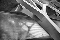 Valencia Spain February 2013 Art Science Museum 382 (beckstei) Tags: white abstract black valencia architecture modern silver arts science chuck efex chuck2 chuck3 chuck4 chuck6 chuck5 chuck7
