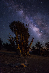Light Up The Night (Eric Gail: AdventuresInFineArtPhotography) Tags: ericgail 21studios canon canon70d 70d explore interesting interestingness photoshop lightroom nik software landscape nature infocus adjust california photo photographer ca cs6 picture lll bristlecone inyo