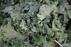 Kale (Erica Lowenkron) Tags: unionsquare unionsquaregreenmarket farmersmarket greenmarket local vegetables veggies newyork newyorkcity nyc