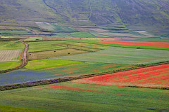 Lezioni di geometria e disegno (Ale*66*) Tags: castelluccio umbria pianamontisibillini colori colors geometrie landscape paesaggio natura nature italy canon6d
