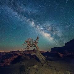 No Man's Land (Edward Tian) Tags: astrophotography sonysingapore sonyalphaprofessionals arizona navajo monumentvalley nightsky stars milkyway