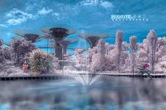 A Dream Land #3 (Samuel.Dai) Tags: gardenbythebay marinabaysands singapore infraredphotography 720nm cityscapephotography tourism touristattraction skyline nikon d7000 1855mm hdr samueldai