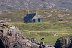 Red Deer and Cottage on Rum (Craig Hannah) Tags: reddeer cottage rum scotland island remote craighannah august 2016 uk wildlife nature