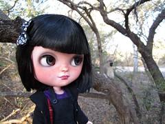 A little visitor (MissLAndMrH) Tags: icy custom doll krugerpark vervetmonkey
