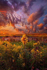 In The Warmth Of Nature's Hand (Phil~Koch) Tags: summer clouds travel journey life mood emotions country outdoors colors living heaven weather horizons sunrise lines landscape sun light field art meadow sky twilight horizon beam ray sunset wisconsin scenic vertical photography blue yellow office portrait serene morning dawn nature natural earth environment inspired inspirational season beautiful peace hope love joy dramatic unity trending popular canon camera rural fineart arts